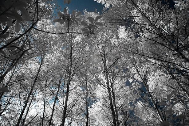 White leafs