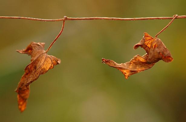 Leaf gymnastics