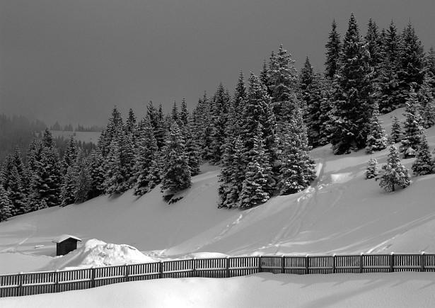 Winterland #1