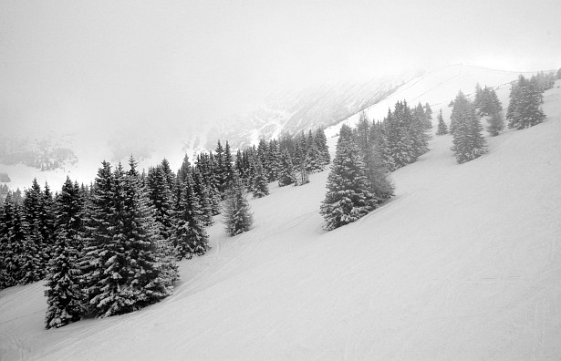 Winterland #2