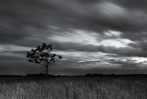 Windy evening