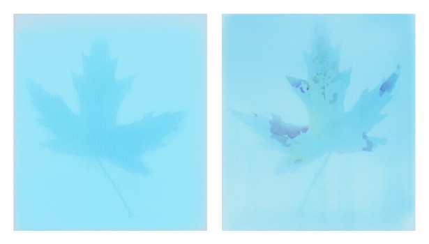 First photograms