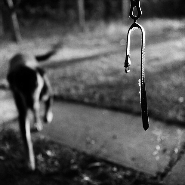 Drop the leash