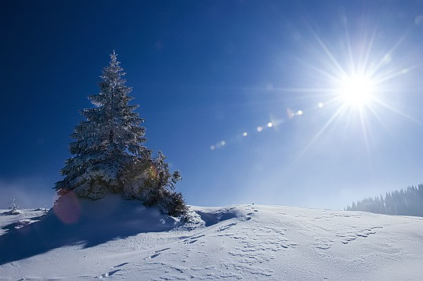 Snow, tree, sunshine