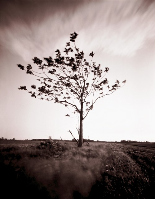 That tree again || Homemade 4x5 pinhole camera | Shanghai sheet film