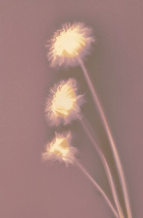 Lumen print #2 || Vephota photo paper | 9x14 cm | 4 hours 15 minutes