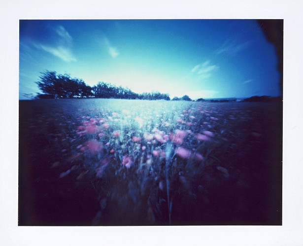 Poppies  || Zeroimage 4x5 pinhole camera | F/138 | Type 59 polaroid film