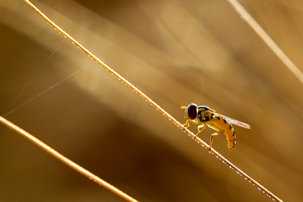 Tightrope walker || Nikon D70 | 50mm F/1.8 D | 1/160 | F/6.3 | ISO 200 | Macro Close-up +10 Lens