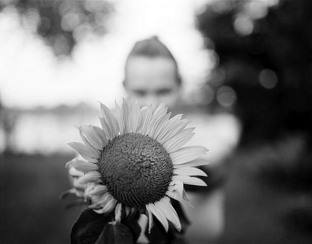 Sunflower power || Graflex Speed Graphic | Graflex Optar 135mm | Shanghai sheet film