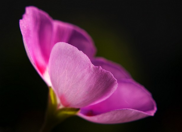 #0747 || Nikon D70 | 50mm F/1.8 D | 1/250 sec | F/10 | ISO 200 | Macro Close-up +10 Lens