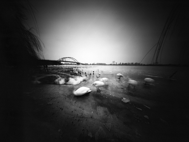 Headless swans || Zeroimage 4x5 | F/138 | Shanghai sheet film