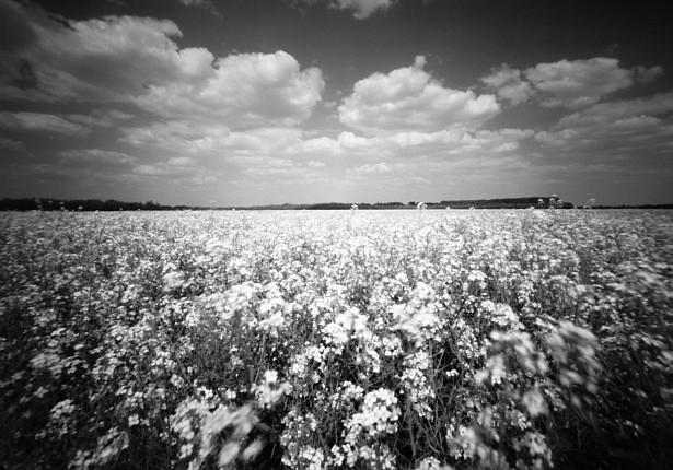 Rape field in black & white || Zeroimage 4x5 | F/138 | Fuji NLP 160 (expired) - converted to B&W