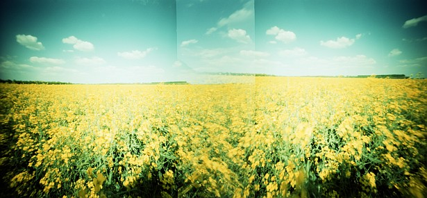 Rape field in cross processed colors || Zeroimage 4x5 with rollfilm holder | F/138 | Fuji Provia 100F - cross processed