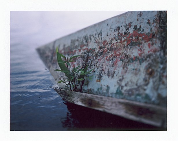 Life always finds a way || Graflex Speed Graphic with Fuji PA-145 holder | Kodak Ektar 127mm | Fuji FP-100C