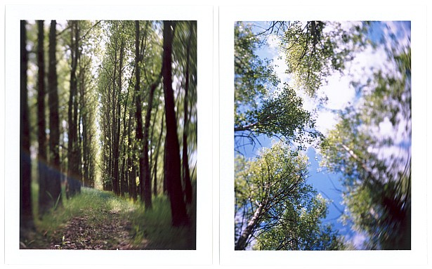 In the woods || Graflex Speed Graphic with Fuji PA-145 holder | Kodak Ektar 127mm | Fuji FP-100C