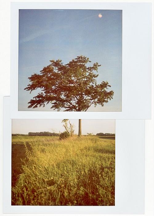 Neverending story || Polaroid SX-70 | Type 600 film