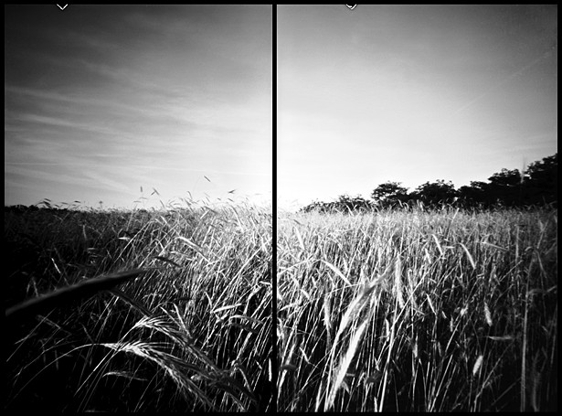 Two in one || Zeroimage 4x5 | F/176 | 2 x Wephota NP 15 sheet film | ISO 25