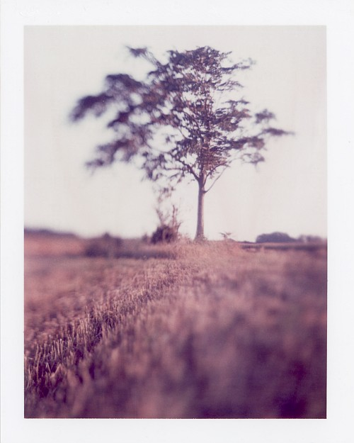 Favourit[re]e || Graflex Speed Graphic with Fuji PA-145 holder | Kodak Aero Ektar 178mm | Polaroid ID-UV (expired)