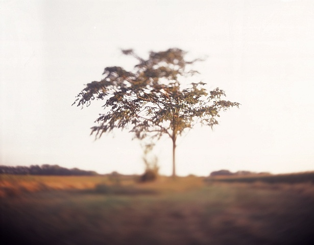 Horizontal || Graflex Speed Graphic | Kodak Aero Ektar 178mm | Fuji Provia 100F