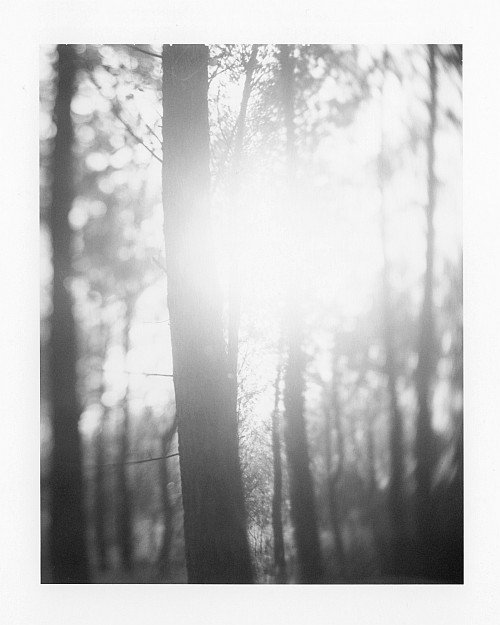 Blinded by the light || Graflex Speed Graphic | Kodak Aero Ektar 178mm | Polaroid Type 72 (expired) | ISO 400