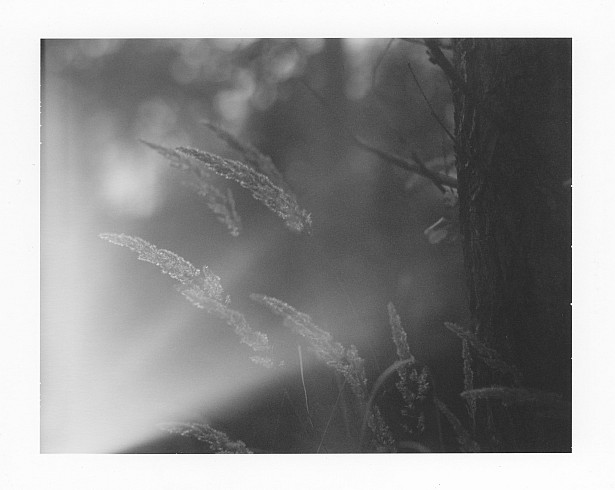 Insignificant || Graflex Speed Graphic | Kodak Aero Ektar 178mm | Polaroid Type 72 (expired)
