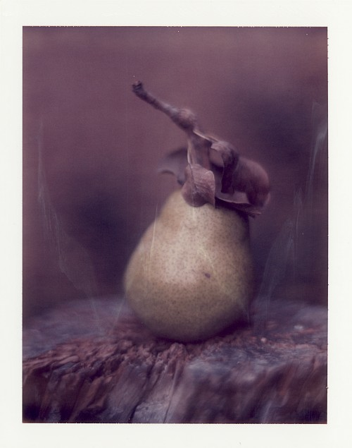 Pola pear || Graflex Speed Graphic with Fuji PA-145 holder | Kodak Aero Ektar 178mm | Polaroid ID-UV (expired)