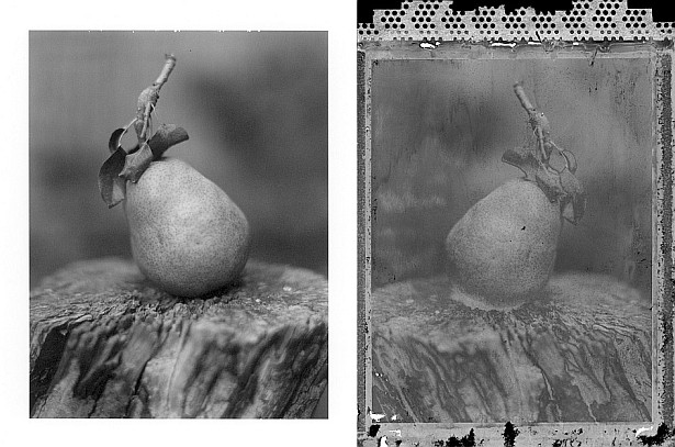 Pola pear #2 || Graflex Speed Graphic | Kodak Aero Ektar 178mm | Polaroid Type 72 (expired)