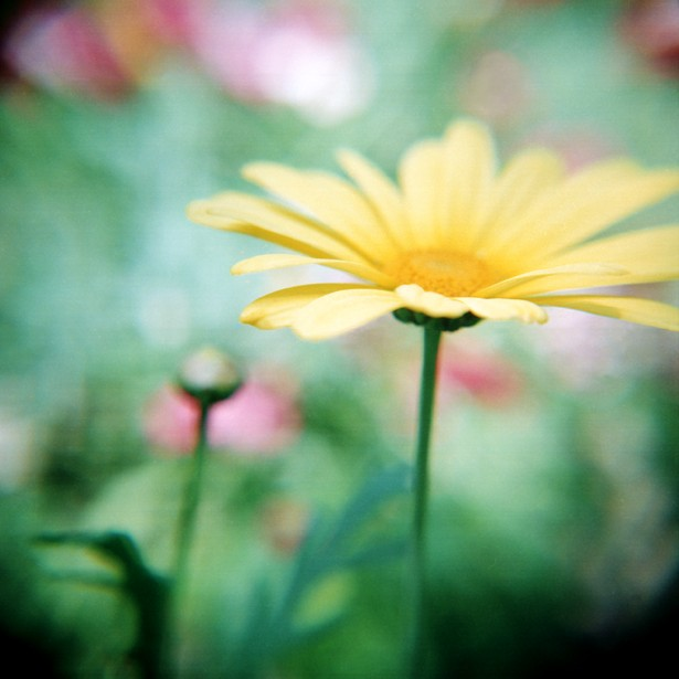 Summer memories #2 || Holga | Konica Minolta Centuria Super 100 | Macro Close-up +10 Lens