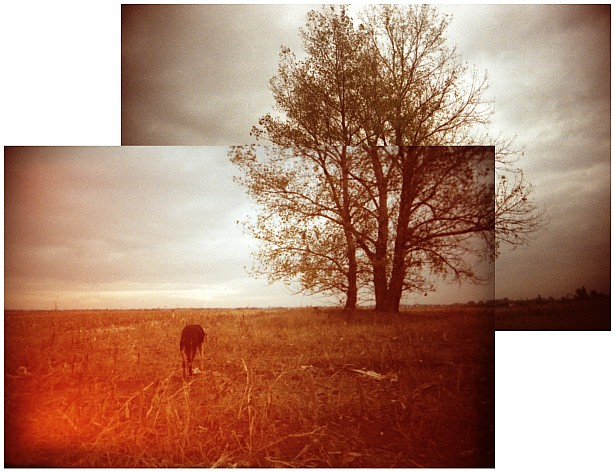 Dog and tree || Vivitar Ultra Wide & Slim | Fuji Superia 1600 (expired)