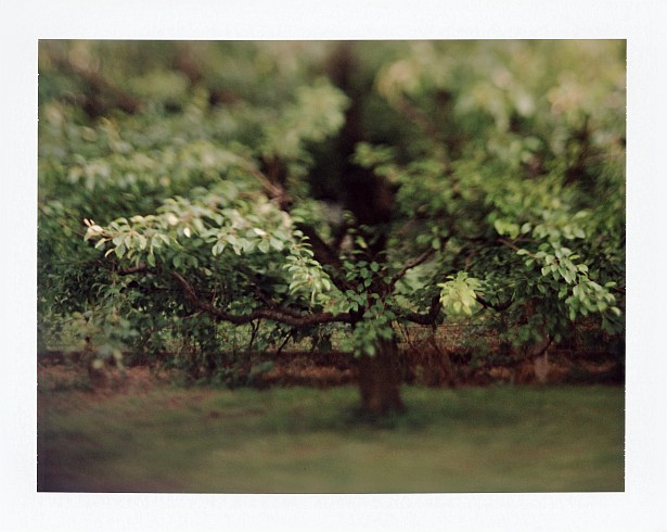 Backyard || Graflex Speed Graphic with Fuji PA-145 holder | Kodak Aero Ektar 178mm | Fuji FP-100C