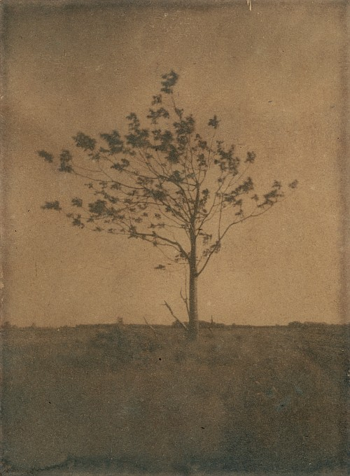 Cyanotree || Homemade 4x5 pinhole camera | Cyanotype, tea toned