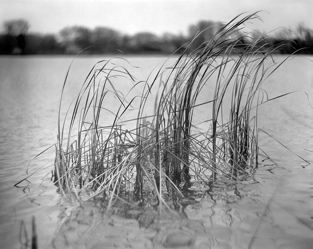 Cold north breeze || Graflex | Kodak Aero Ektar 178mm | Shanghai sheet film | ISO 100