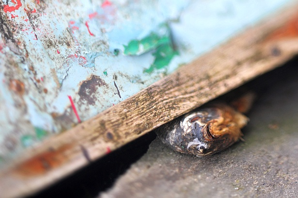Dead like me || Nikon D300 | Homemade tilt-shift lens | F/2.8 | 1/160 | ISO 200
