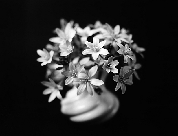 White flowers || Graflex | Kodak Aero Ektar 178mm | Shanghai sheet film