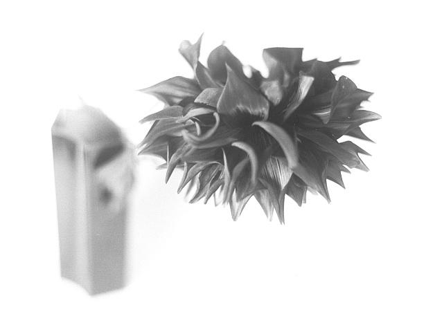 #1142 || Graflex Speed Graphic | Kodak Aero Ektar 178mm | Foma 100