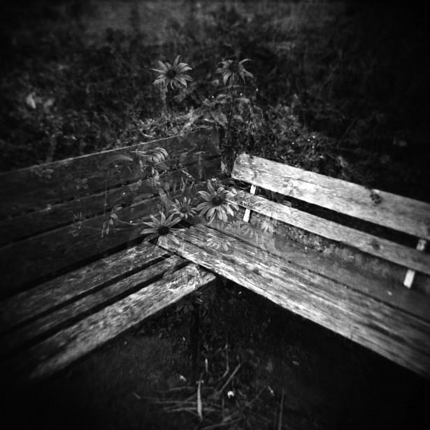 Bench & flowers || Holga | Foma Fomapan 100