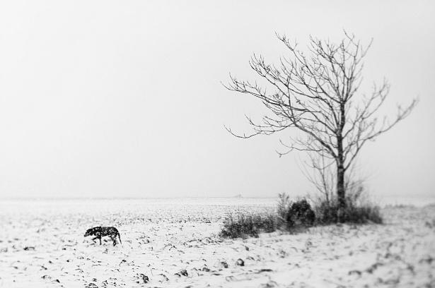 A kutya-fája || Nikon D300 | Homemade tilt-shift lens | 1/500
