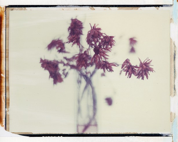 Fading away || Graflex Speed Graphic with Fuji PA-145 holder | Kodak Aero Ektar 178mm | Polaroid 669