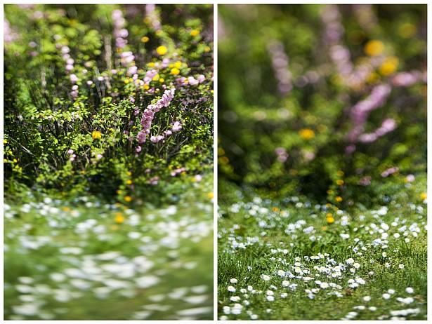 100% Spring || Nikon D300 | Homemade tilt-shift lens | F/2.8 | 1/2500 | ISO 200