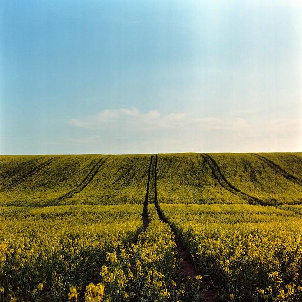 Landscape with and without photographer #2 || Yashica Mat-124G | Yashinon 80mm F/3.5 | Kodak Ektar 100