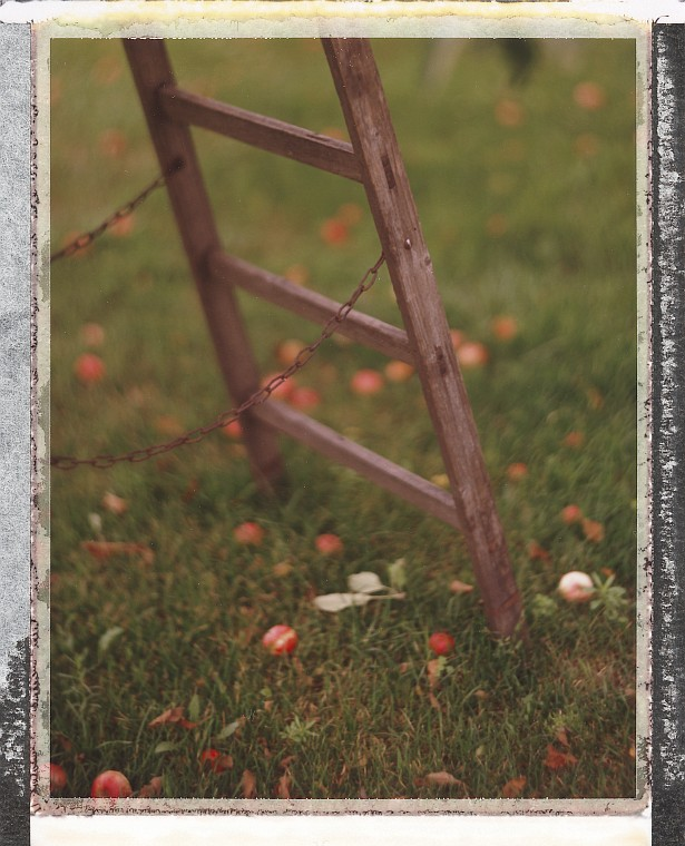 Apple tree & ladder #2 || Graflex Speed Graphic | Kodak Aero Ektar 178mm | Fuji FP-100C