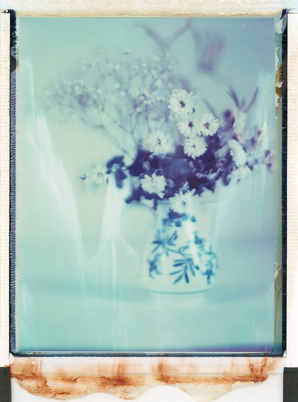 Pola flowers #2 || Graflex Speed Graphic | Kodak Aero Ektar 178mm | Polaroid ID-UV