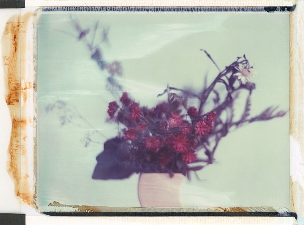 Pola flowers #3 || Graflex Speed Graphic | Kodak Aero Ektar 178mm | Polaroid ID-UV