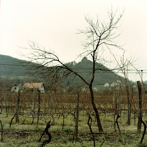Quiet winter days in the Somló wine region || Hasselblad 500C/M | Zeiss Planar 2.8/80mm | Kodak Portra 160VC