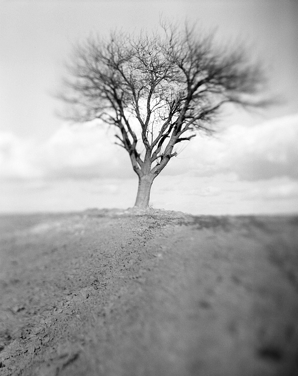 Lonely tree without the empty house || Graflex Speed Graphic | Kodak Aero Ektar 178mm | Foma Fomapan 100