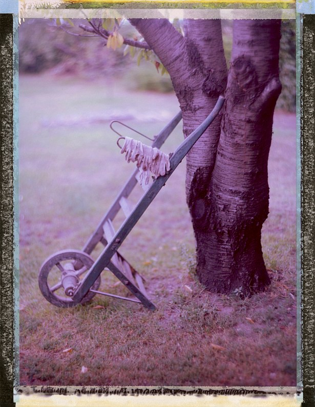 Backyard stories #2 || Graflex Speed Graphic | Kodak Aero Ektar 178mm | Fuji FP-100C45