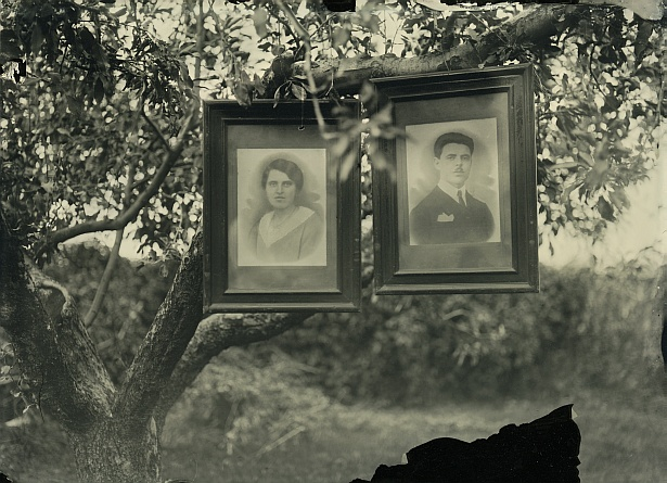 Family tree || FKD | Industar-51 f4.5 210mm | Wet plate collodion on 13x18 cm clear glass